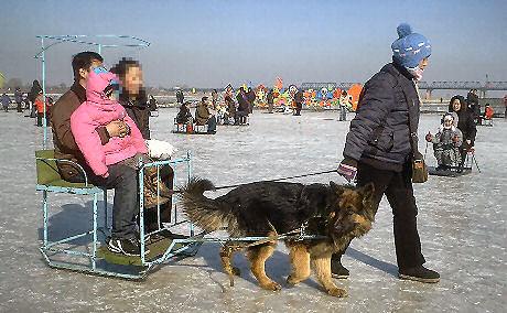 080217dog