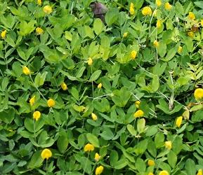 家庭菜園で楽しく育てる春植え野菜