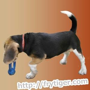 犬がタオルを噛む理由!禁止しないでうまく遊ばせましょう。