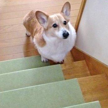 階段の滑り止めを賃貸住宅につける方法