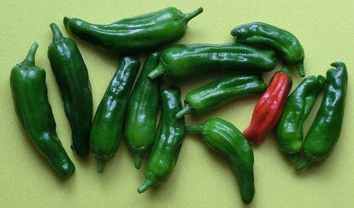 プランターで作る夏野菜をなら、何を選ぶ。