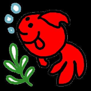 金魚の水換え頻度とその方法!カルキ抜きはどうする